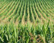 Điều kiện bảo hộ giống cây trồng theo quy định hiện nay