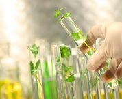 Chuyển giao quyền sử dụng giống cây trồng theo quy định của pháp luật