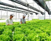 Ưu đãi về đất cho doanh nghiệp đầu tư vào nông nghiệp