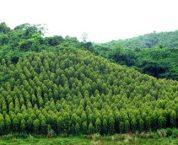 Chế độ sử dụng đất rừng theo luật