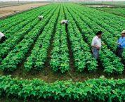 Thời hạn sử dụng đất nông nghiệp hiện nay