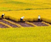 Có được xây nhà trên đất nông nghiệp không?