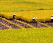Điều kiện tặng cho đất ruộng theo quy định của pháp luật